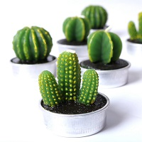 Cactus plant candles - 6-candle gift set