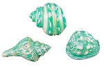 Turquoise-blue shell shaped candles - Box of 3